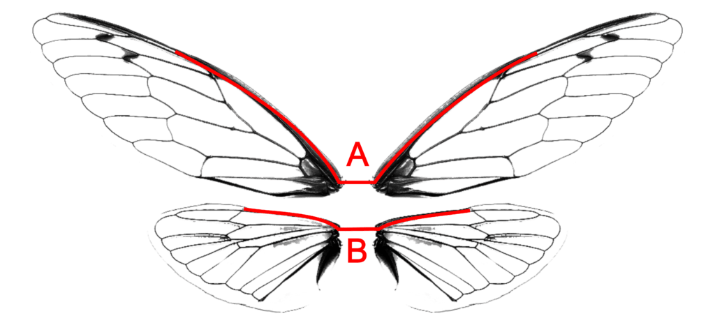Alternate Wire Configuration for the Transparent Wings ... on