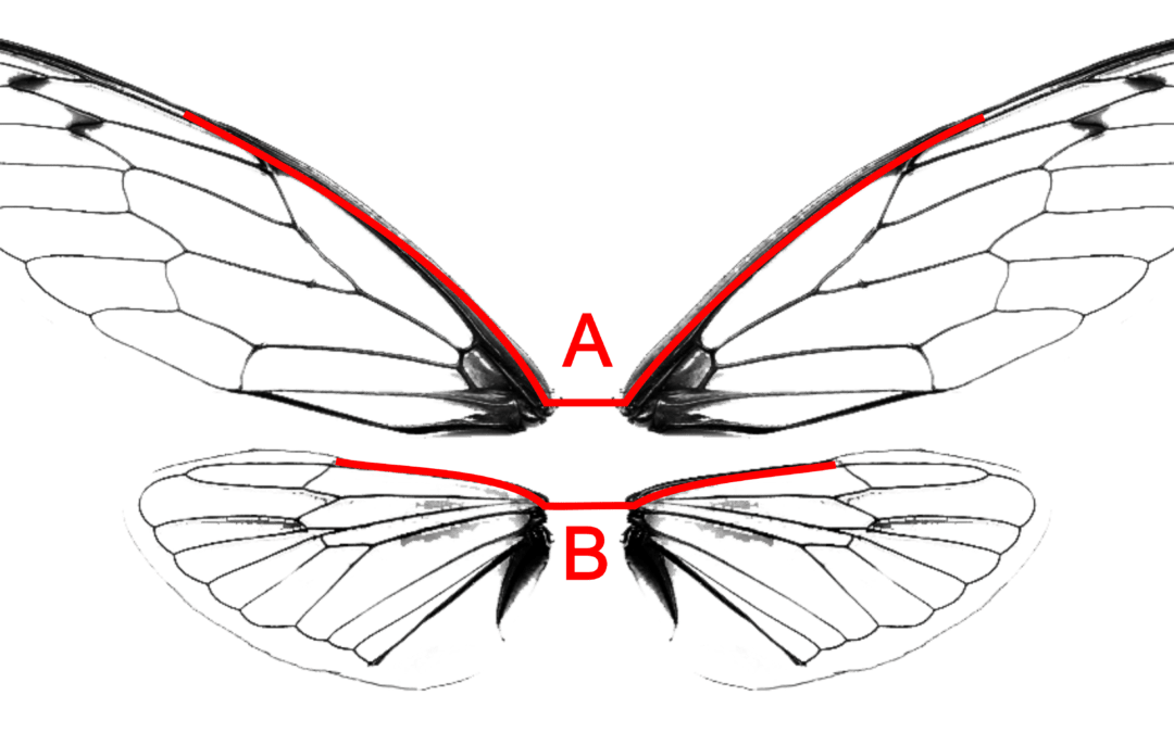 Alternate Wire Configuration for the Transparent Wings